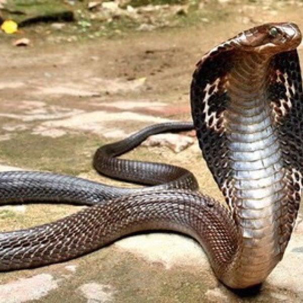 Сон схватил змею за шею