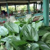 Foto Rafflesia Restaurant, Sukabumi