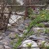 Foto sungai gp sejahtera manggeng,