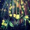 Фото Цветы Удмуртии