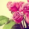 Фото Цветы Дона
