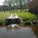 said-vanenburg-23559299