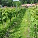 ramon-schonhage-10302693