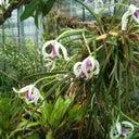 reinhart-orchidee-17400110