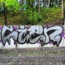 robin-11554297