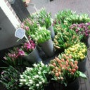 enjoy-beauty-flowers-18935447