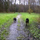 willeke-boerman-cats-dogs-services-8168142