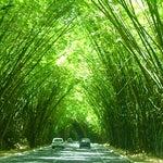 Coisa linda, saindo ou retornando ao Aeroporto, e se deparar com os túneis de caniços curvados (bambus), cobrindo o início da estrada com destino ao centro de Salvador/Bahia ou, vice-versa...