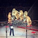 Фото Цирк в соцсетях