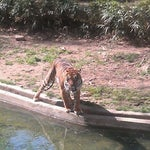 Photo taken at Great Cats at The National Zoo by Tatiana S. on 3/26/2012