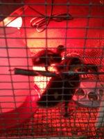 Kahoots Pet Store
