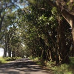 Photo taken at Tunnel Of Trees by Linh H. on 10/13/2012