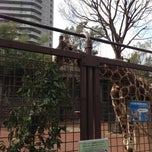 Photo taken at 上野動物園 キリン舎 (Giraffes Cage - Ueno Zoo) by 성국 김. on 3/17/2013