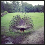 Photo taken at Magnolia Plantation and Gardens by Timur T. on 7/5/2013