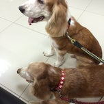 Photo taken at โรงพยาบาลสัตว์สุวรรณชาด (Suwanchard Pet Hospital) by Teravuth R. on 11/15/2014