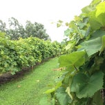 Photo taken at StarView Vineyards by Jason S. on 6/29/2014