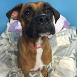 Photo taken at Shelburne Pet Center by Michelle B. on 8/7/2014