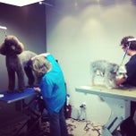 Photo taken at Unleashed Dog Spa by georgiana on 3/5/2013