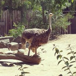 Photo taken at Sacramento Zoo by Josiah S. on 5/19/2013