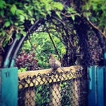 Photo taken at Fenway Victory Gardens by Jason T. on 6/9/2013
