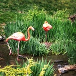 Photo taken at Philadelphia Zoo by Mona D. on 4/28/2013