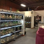 Photo taken at LLL Reptile by Nancie D. on 2/8/2013