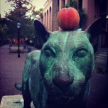 Photo taken at Cougar Mall, College of Charleston by Matches M. on 10/7/2012