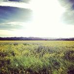 Photo taken at Alexander Valley by Vino V. on 3/14/2013