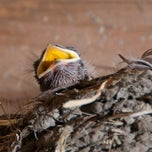 Photo taken at Wild Birds Unlimited by U.S. Environmental Protection Agency on 9/18/2013