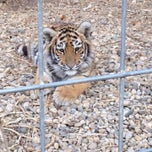 Photo taken at Exotic Feline Rescue Center by Nikki on 11/17/2013