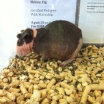 Photo taken at Petmart by Mervin T. on 1/6/2013