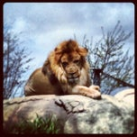 Photo taken at Dallas Zoo by Gonzalo M. on 4/1/2013