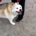 Photo taken at Quidi Vidi Dog Park by Leena on 11/7/2012
