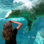 Photo taken at Cincinnati Zoo & Botanical Garden by David K. on 7/21/2013