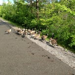 Photo taken at Rayhill Memorial Trail Access by Desmond  on 7/4/2013