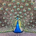 Photo taken at Cincinnati Zoo & Botanical Garden by Chris T. on 3/10/2013