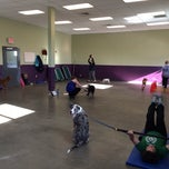 Photo taken at K9 Kaos by The Nerdy Dog Fitness on 1/23/2014