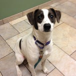 Photo taken at Chelmsford Animal Hospital by Crystal A. on 10/23/2013