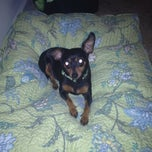 Photo taken at The Man Pad Featuring The Retarded Min Pin by Christopher C. on 5/10/2012
