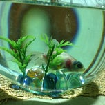 Photo taken at FishPlanet Aquarismo by Leonardo S. on 4/11/2013