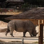 Photo taken at San Antonio Zoo by Amanda G. on 2/5/2013