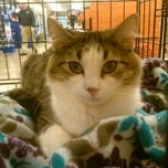 Photo taken at PetSmart by Liana L. on 2/9/2013