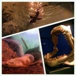 Photo taken at The Living Planet Aquarium by Jennifer A. on 3/1/2013