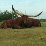 Photo taken at Safari de Peaugres by Thomas B. on 7/10/2013