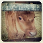 Photo taken at Cherry Grove Farm by Jeremy J. on 11/4/2013