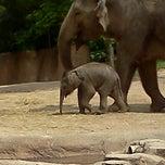 Photo taken at Saint Louis Zoo by Heather B. on 6/4/2013