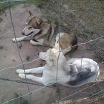 Photo taken at Wolf sanctuary by Sarah Bell India I. on 2/12/2015