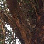 Photo taken at Koala Spotting In The Adelaide Hills by Cybaright on 12/12/2012