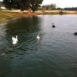 Photo taken at Swan Lake, Heritage by Dhyann L. on 7/10/2014