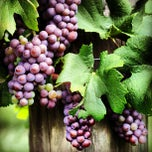 Photo taken at Clover Hill Winery by Discover Lehigh Valley on 5/30/2013